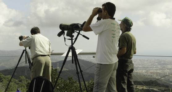 Albiraments d'aus migratòries al Turó de la Magarola FOTO: Parc de Collserola