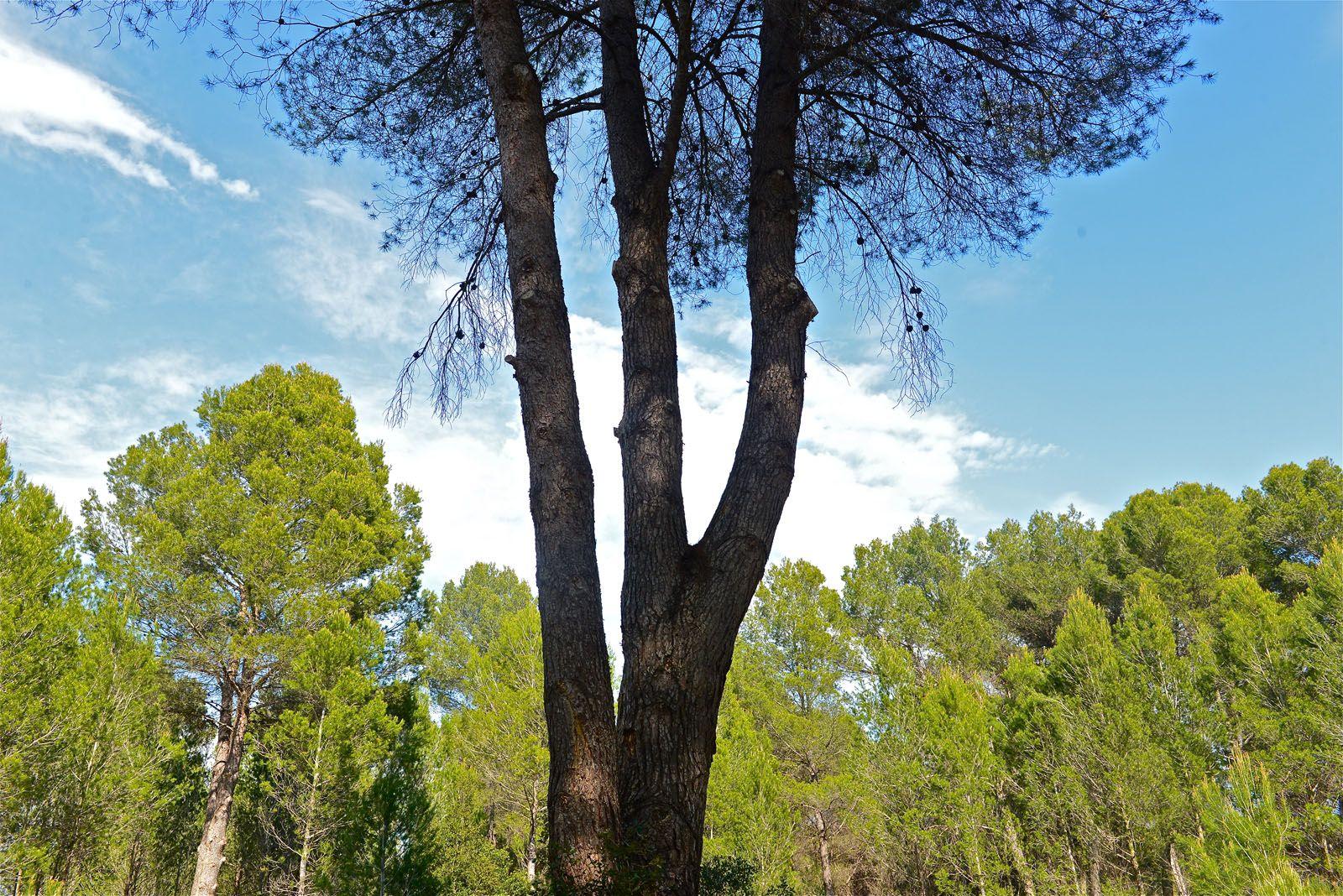 Hi ha documents de l'any 1853 que ja parlen de l'existència d'aquest bosc