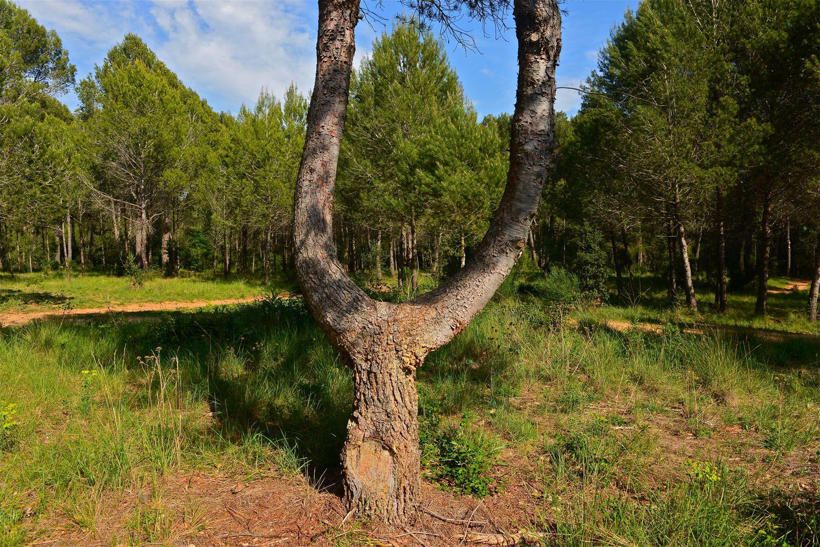 La flora i la fauna del bosc de Volpelleres és la típica de la zona del mediterrani