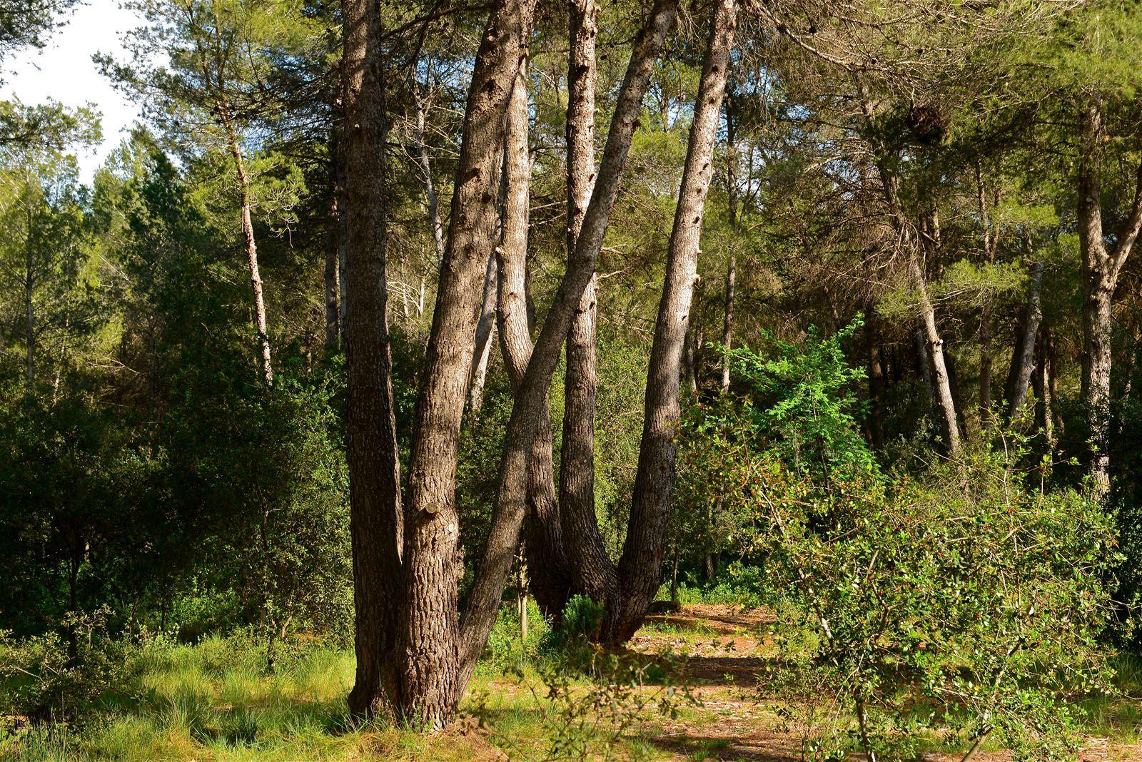 Dins el bosc hi ha una riera