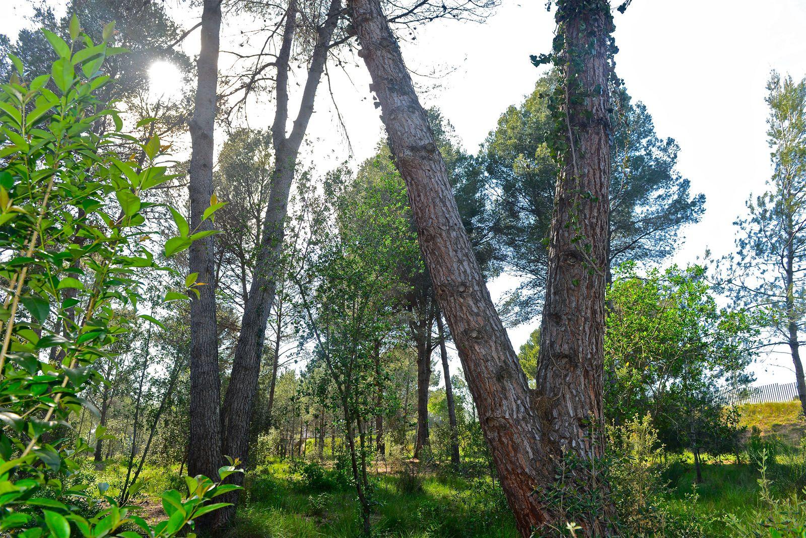 L'AMB i l'Ajuntament estan treballant per potenciar els usos del bosc