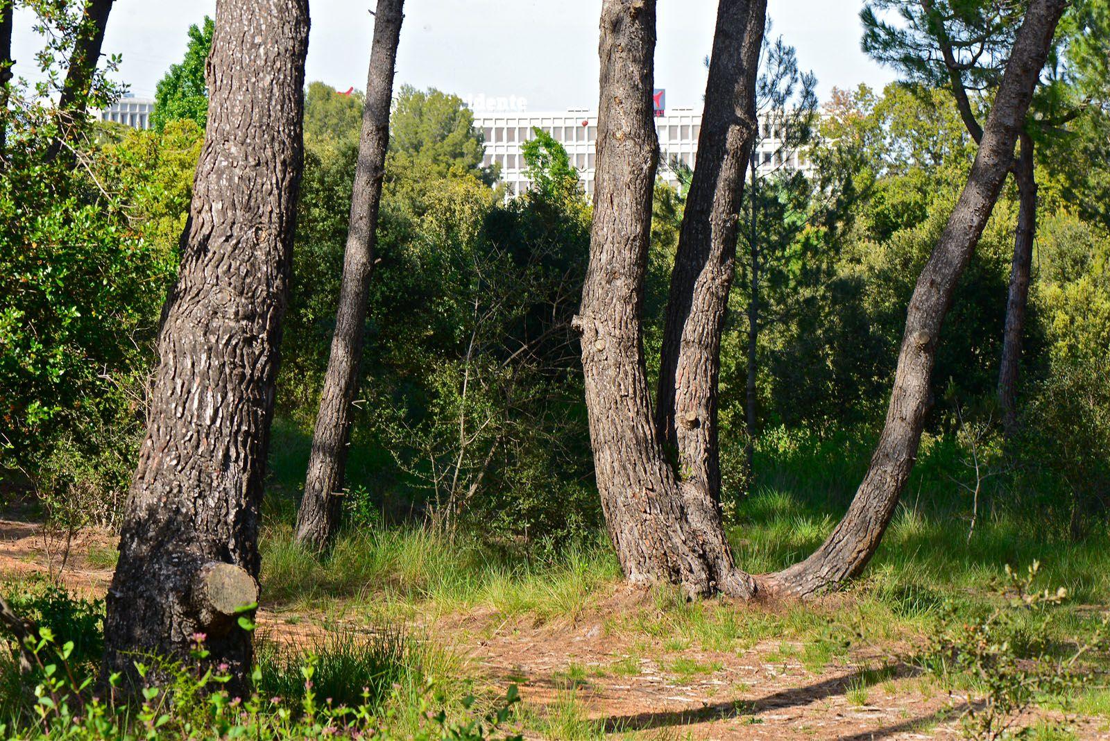 El bosc es troba al carrer d'Alfons d'Aragó, a tocar de l'estació de Volpelleres. FOTO: Arxiu