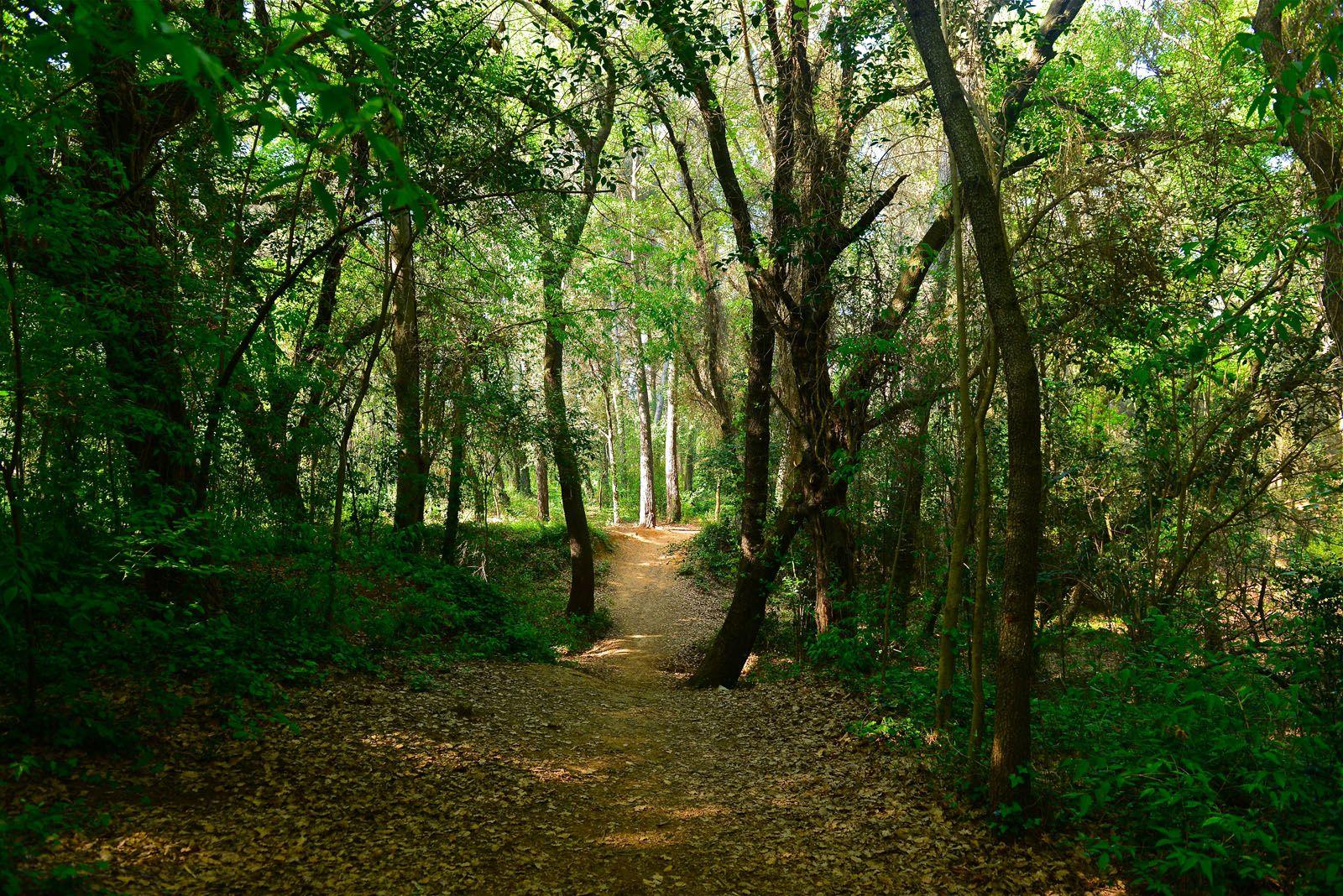En el bosc hi ha un circuit de cros, inaugurat l'any 2010