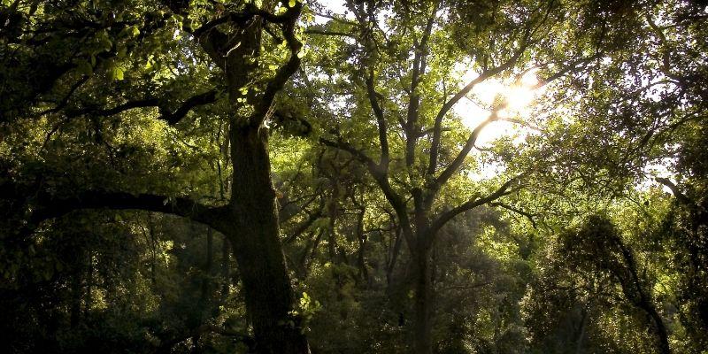 Els camins que amaga l'entorn natural de Collserola