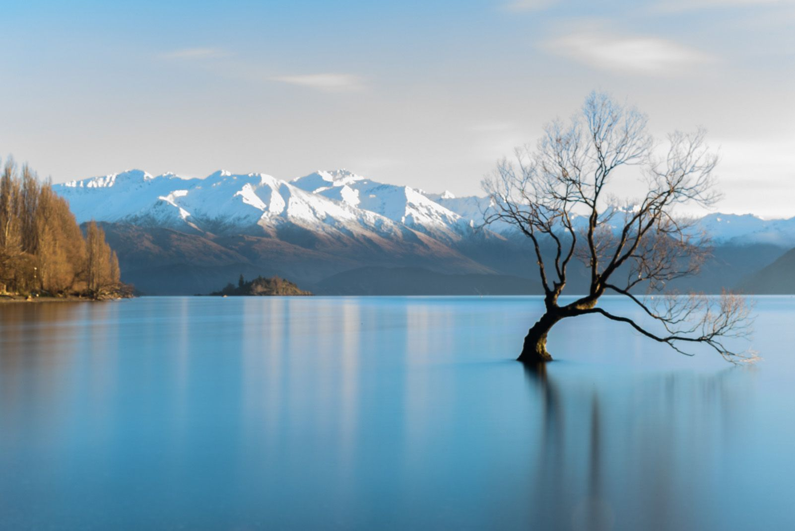 "11è Premi categoria Viatges. ""Wanaka tree"" de Eduard Cuevas."