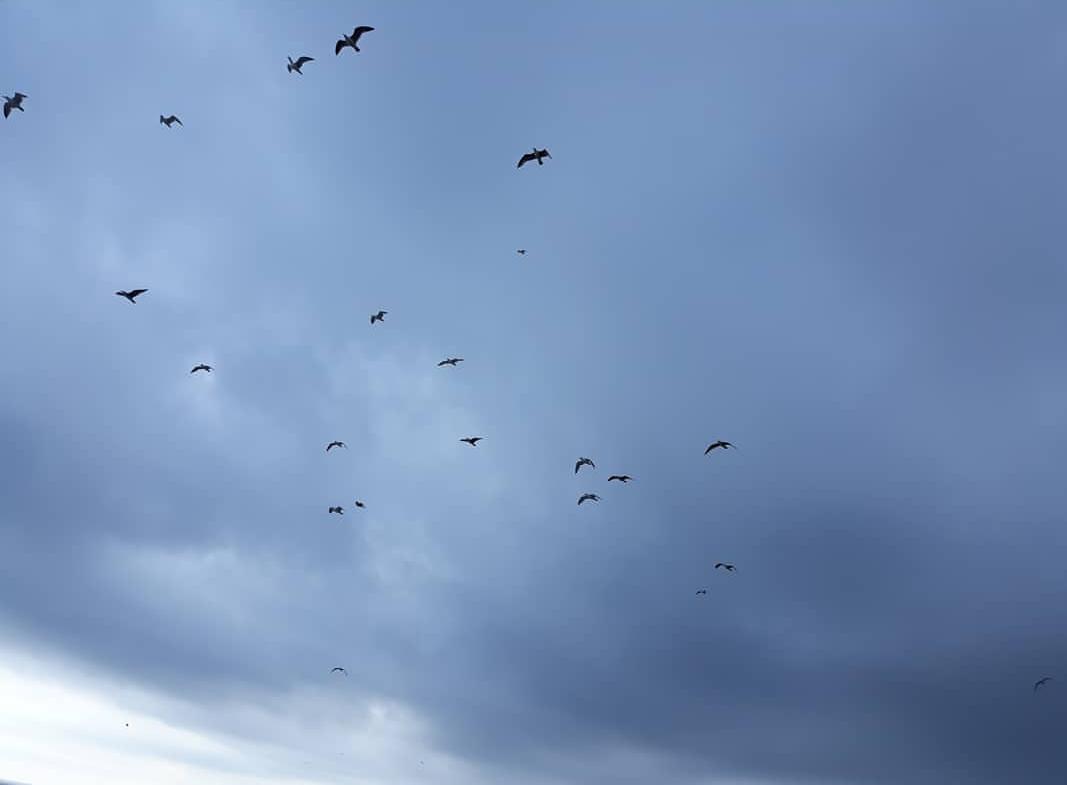 "Elisa Campos perez ""Arriba l'oratge"""