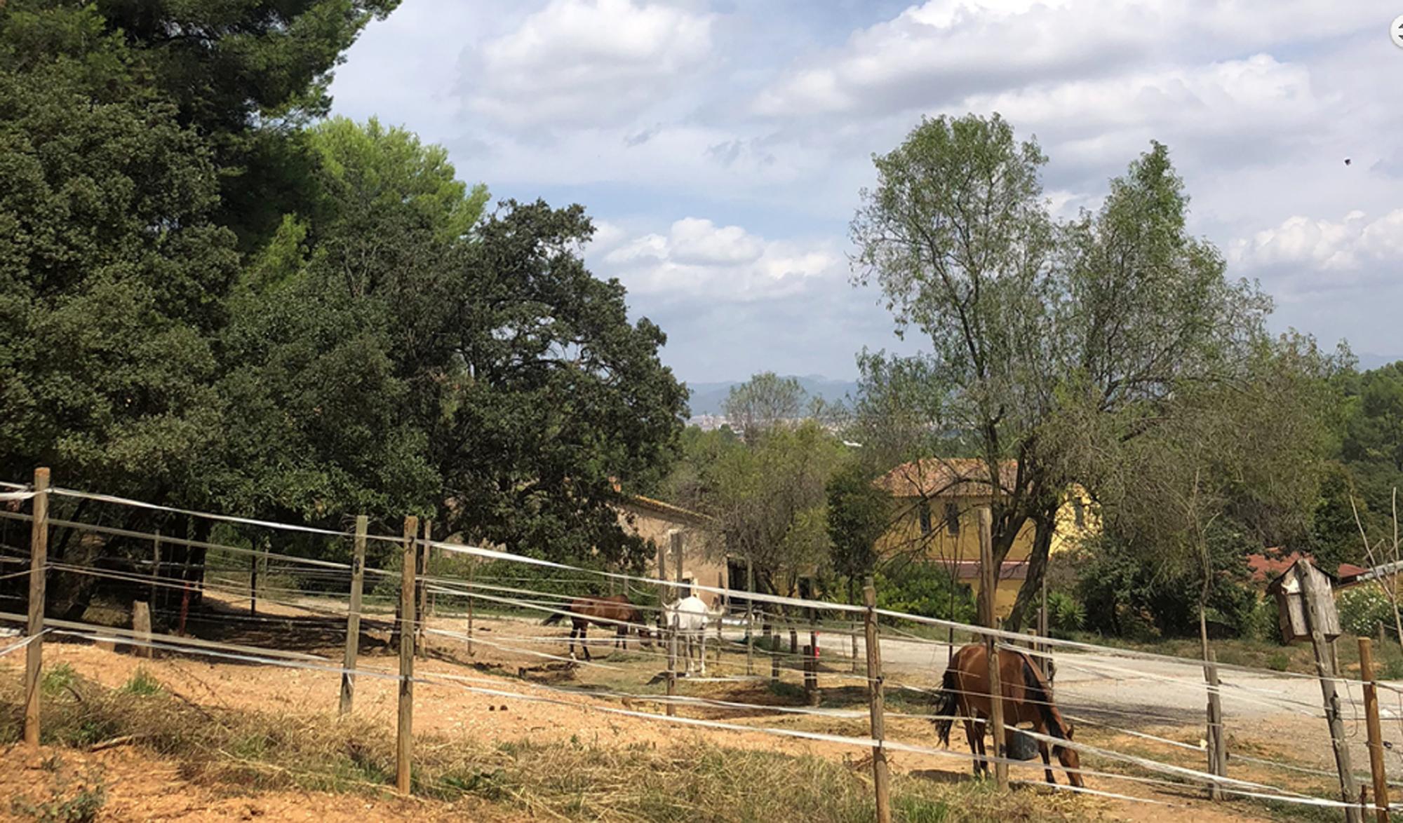 Entorn privilegiat per els cavalls. FOTO: Cedida