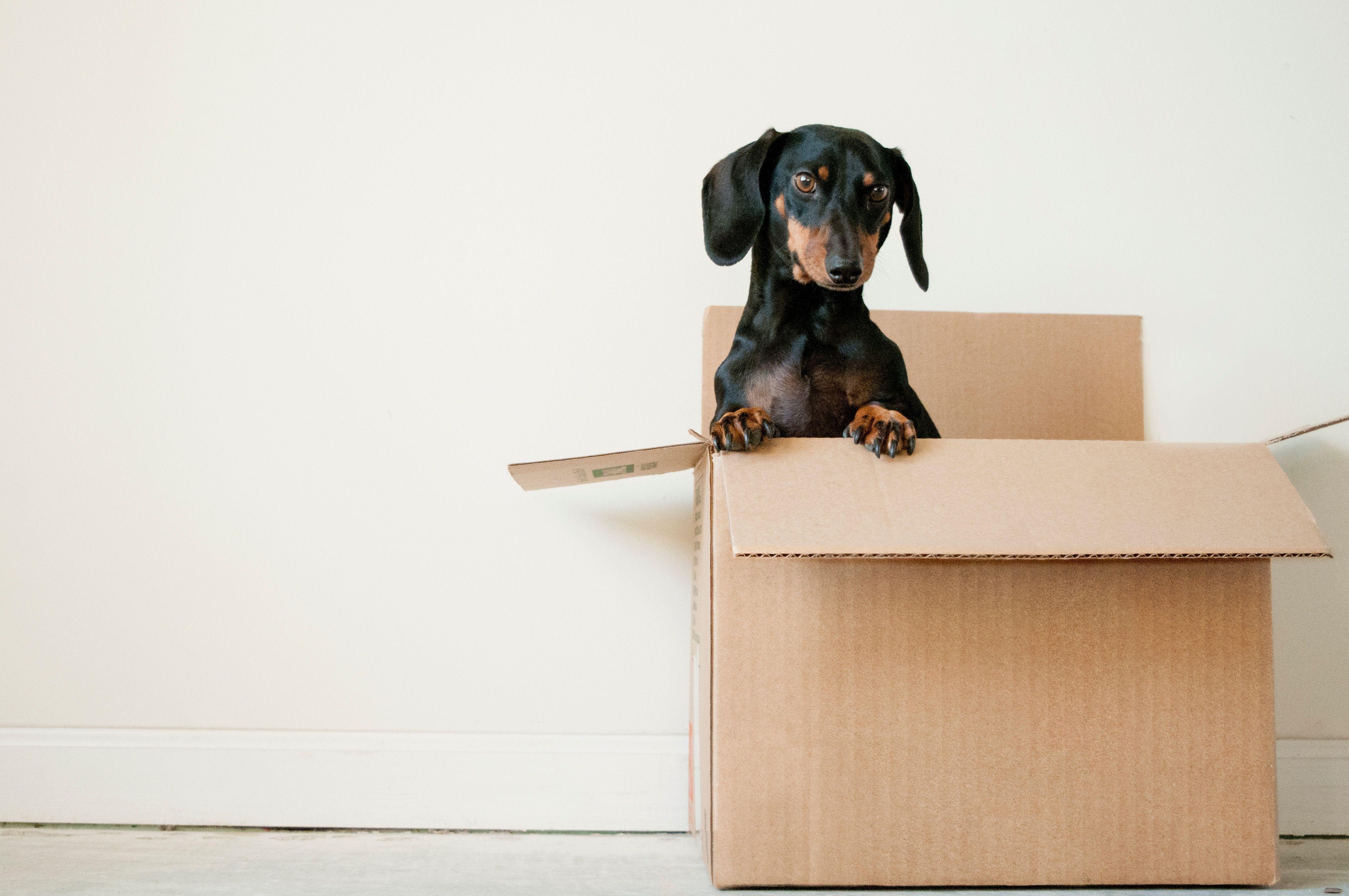 Porta les teves coses a la teva nova casa amb total seguretat FOTO: Cedida