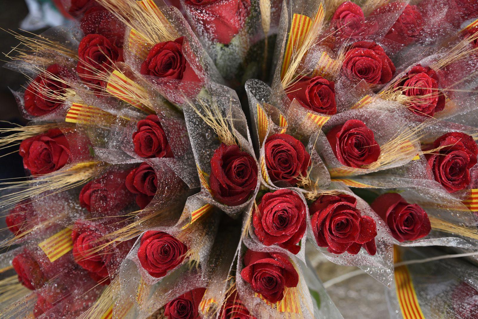 Roses vermelles de la diada de Sant Jordi. Foto: Bernat Millet.