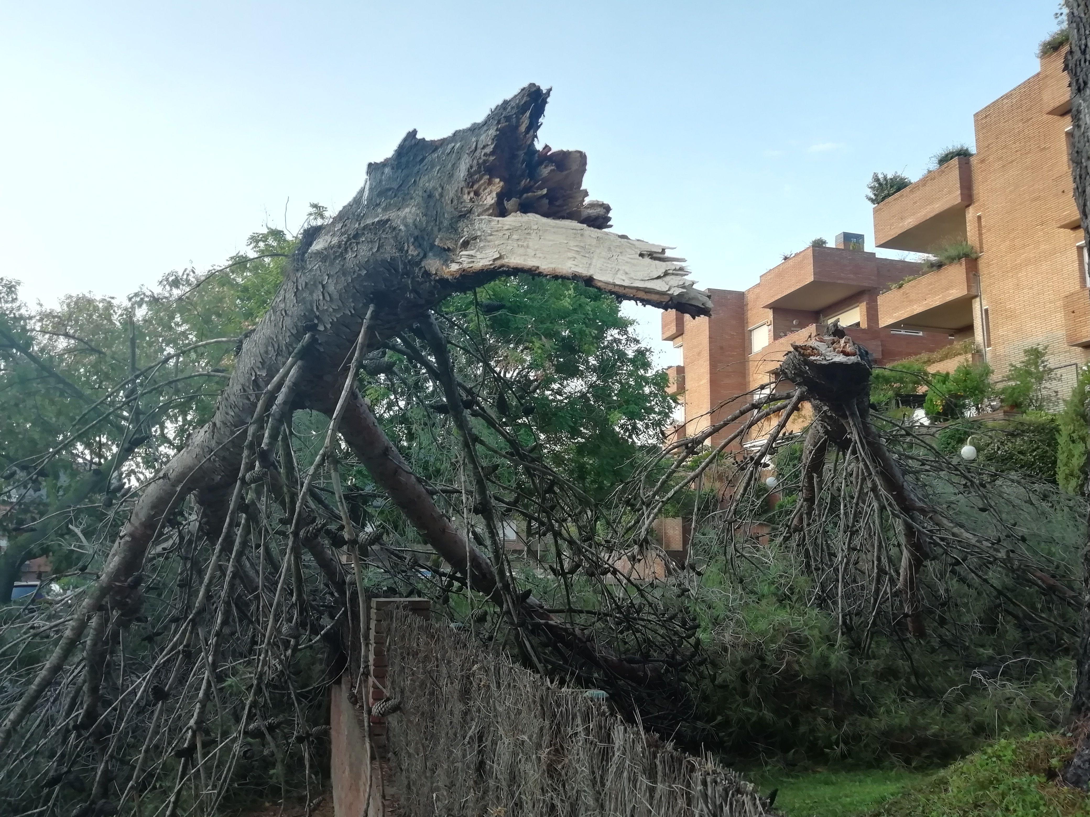 Arbres caiguts durant la tempesta a Sant Cugat. Foto: Bernat Bellla.