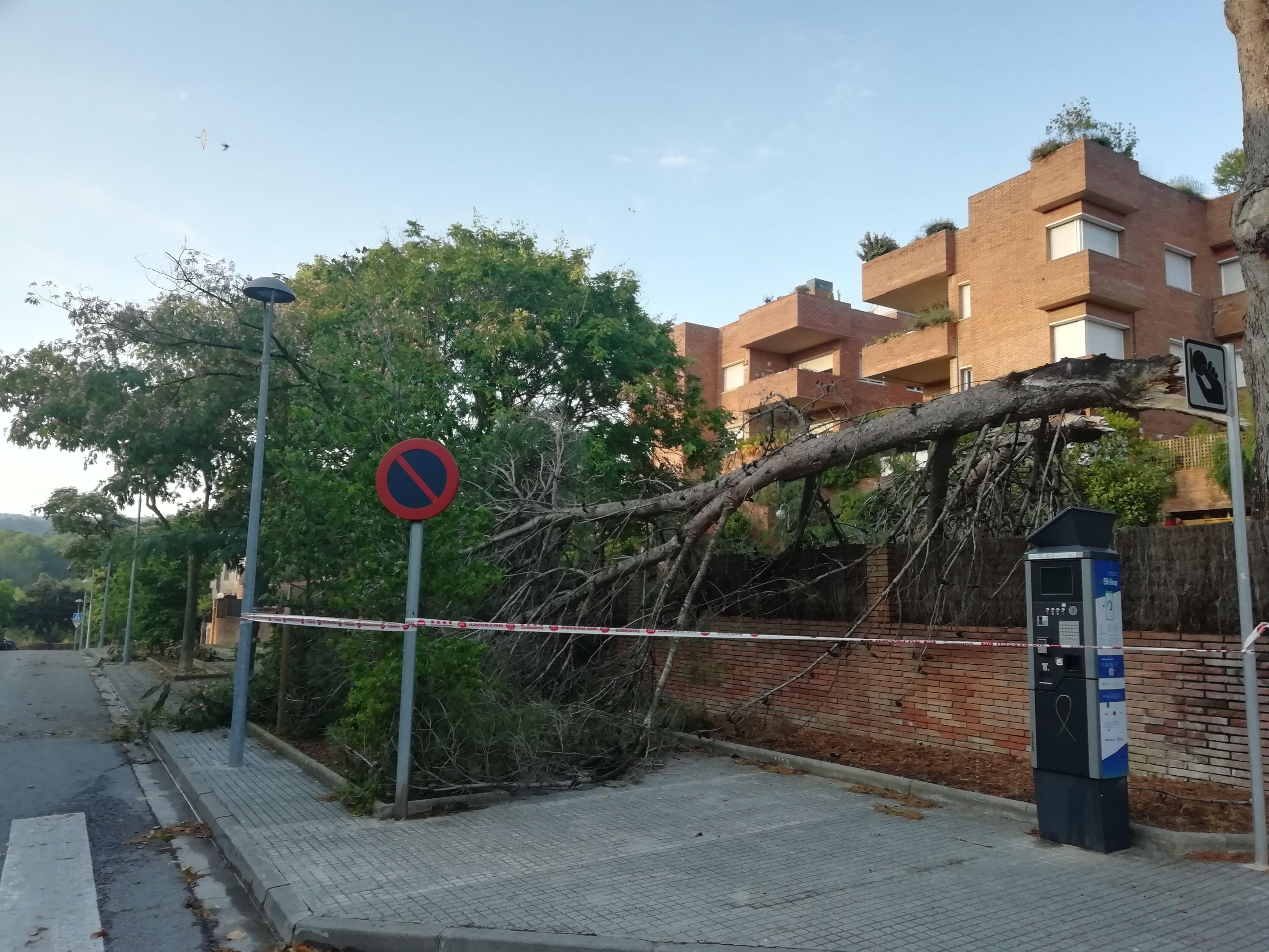Arbres caiguts durant la tempesta a Sant Cugat. Foto: Bernat Bella.