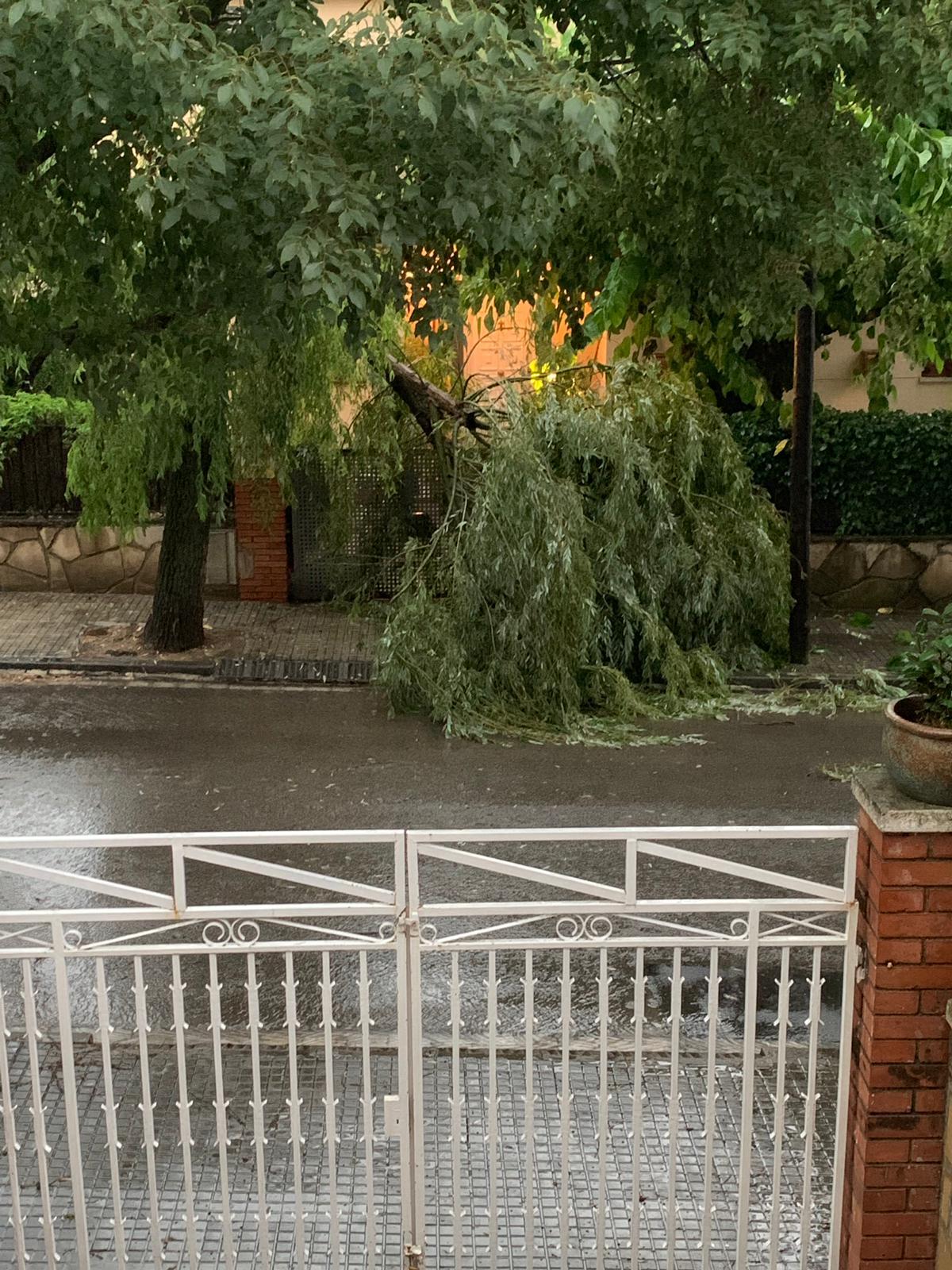 Arbres caiguts durant la tempesta a Sant Cugat. Foto: Cedida.