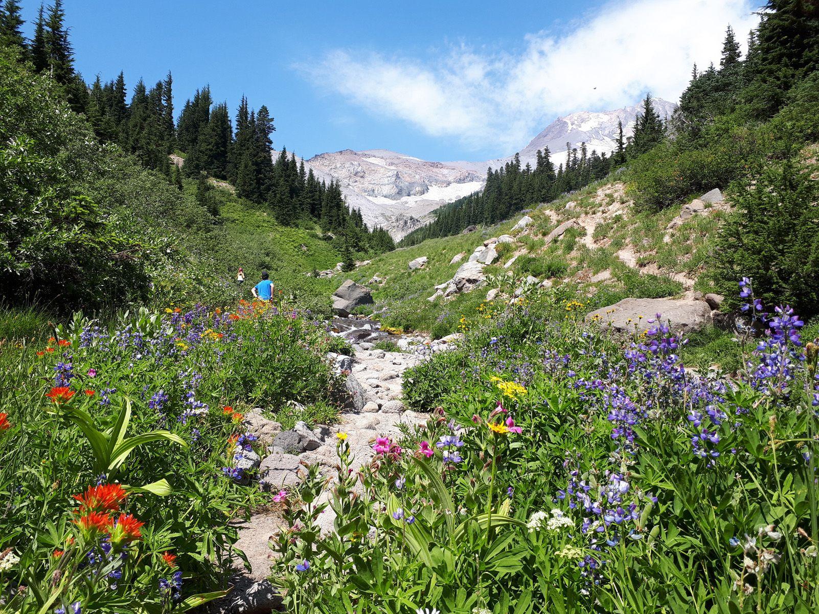 Toni Izquierdo Alsina   Una caminata colorida   Mount Hood, Oregon, EEUU