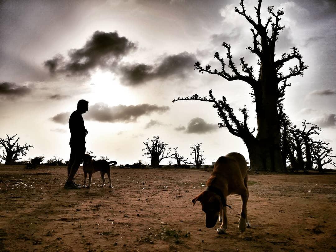 almareste    Baobab.