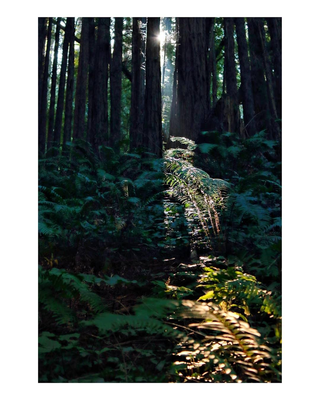 astrue photo   Vitralls del bosc
