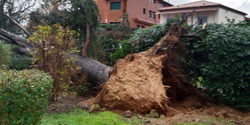 les conseqüències del temporal Glòria