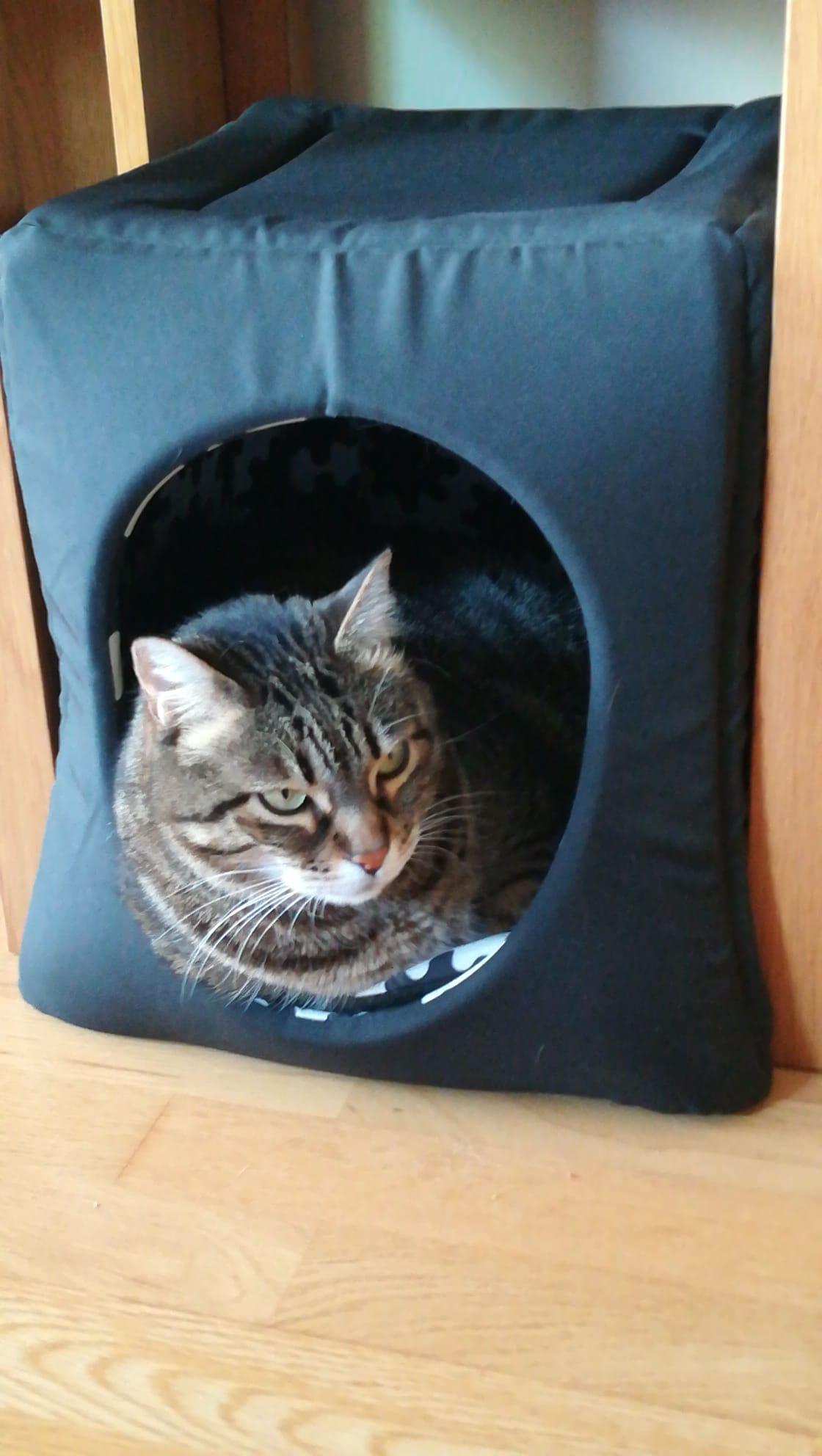 El gat a la seva caseta.