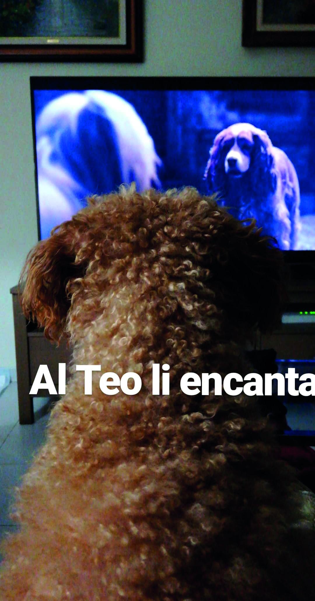 """En Teo mirant la """"Dama y el Vagabundo"""""""
