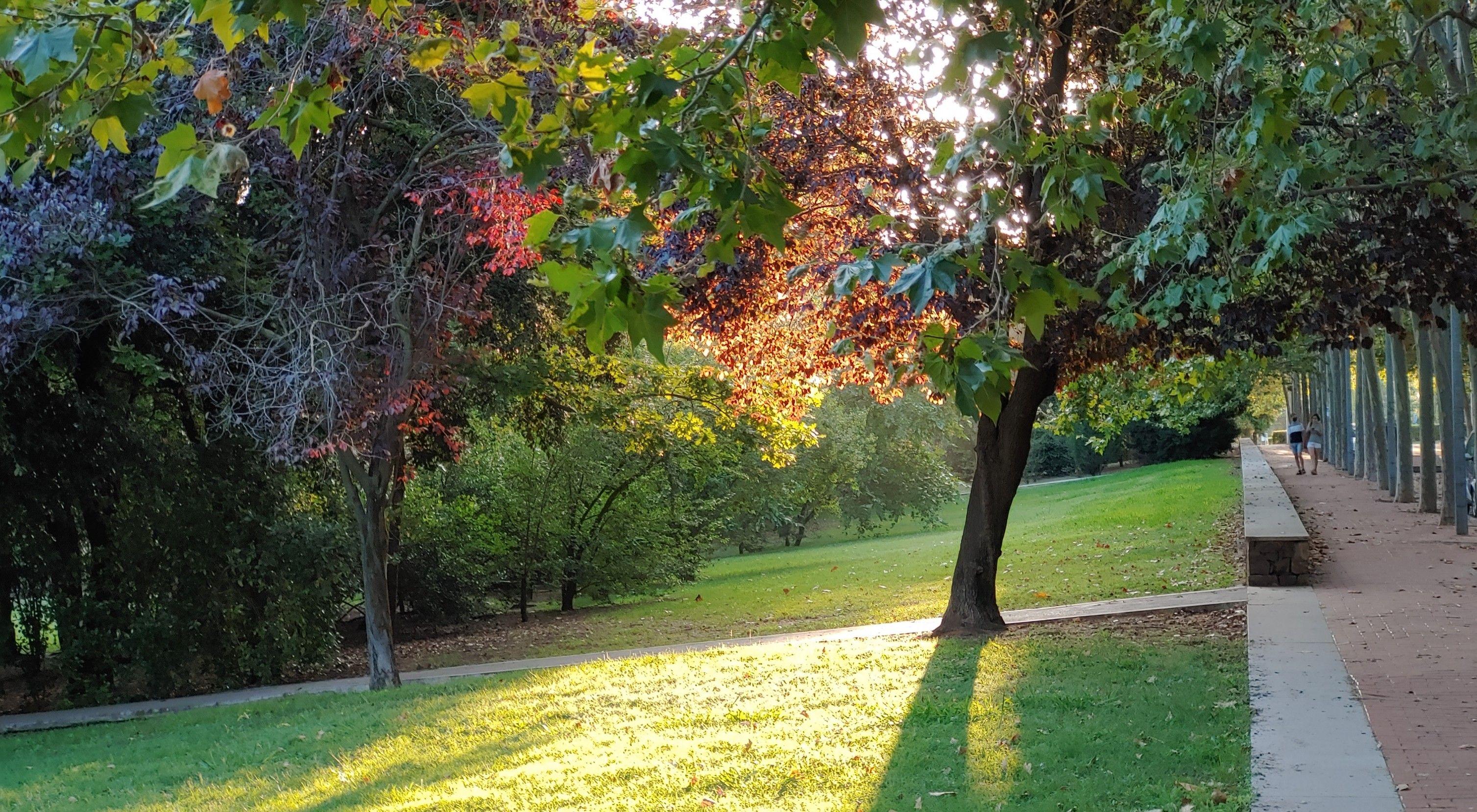 Apreciando lo cercano Parc Central, Sant Cugat#Miguel Iglesias Bauza 155