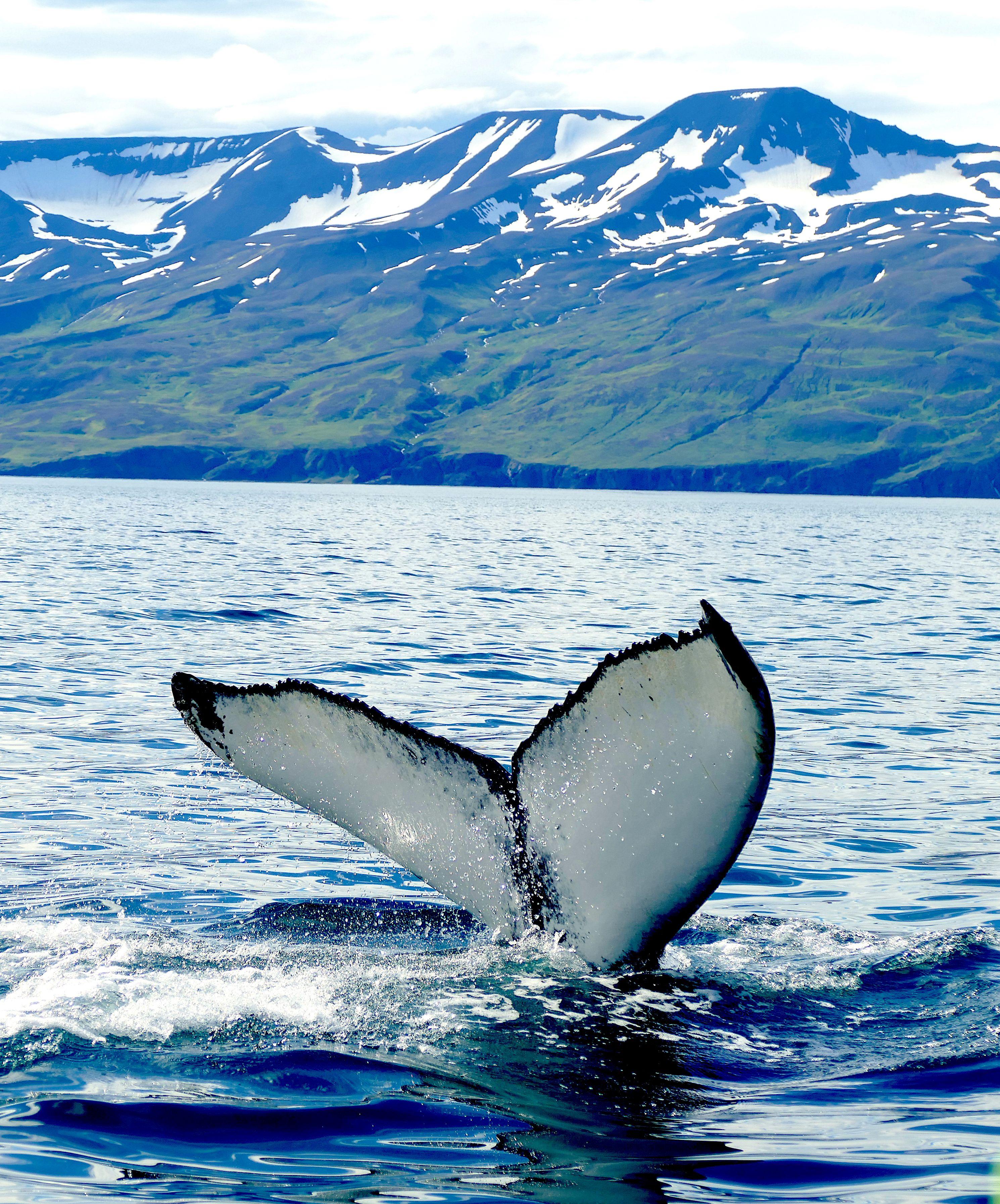 Aquest estiu, mar i muntanya! Husavik, Islàndia#Samanta Judez Fuentes 288