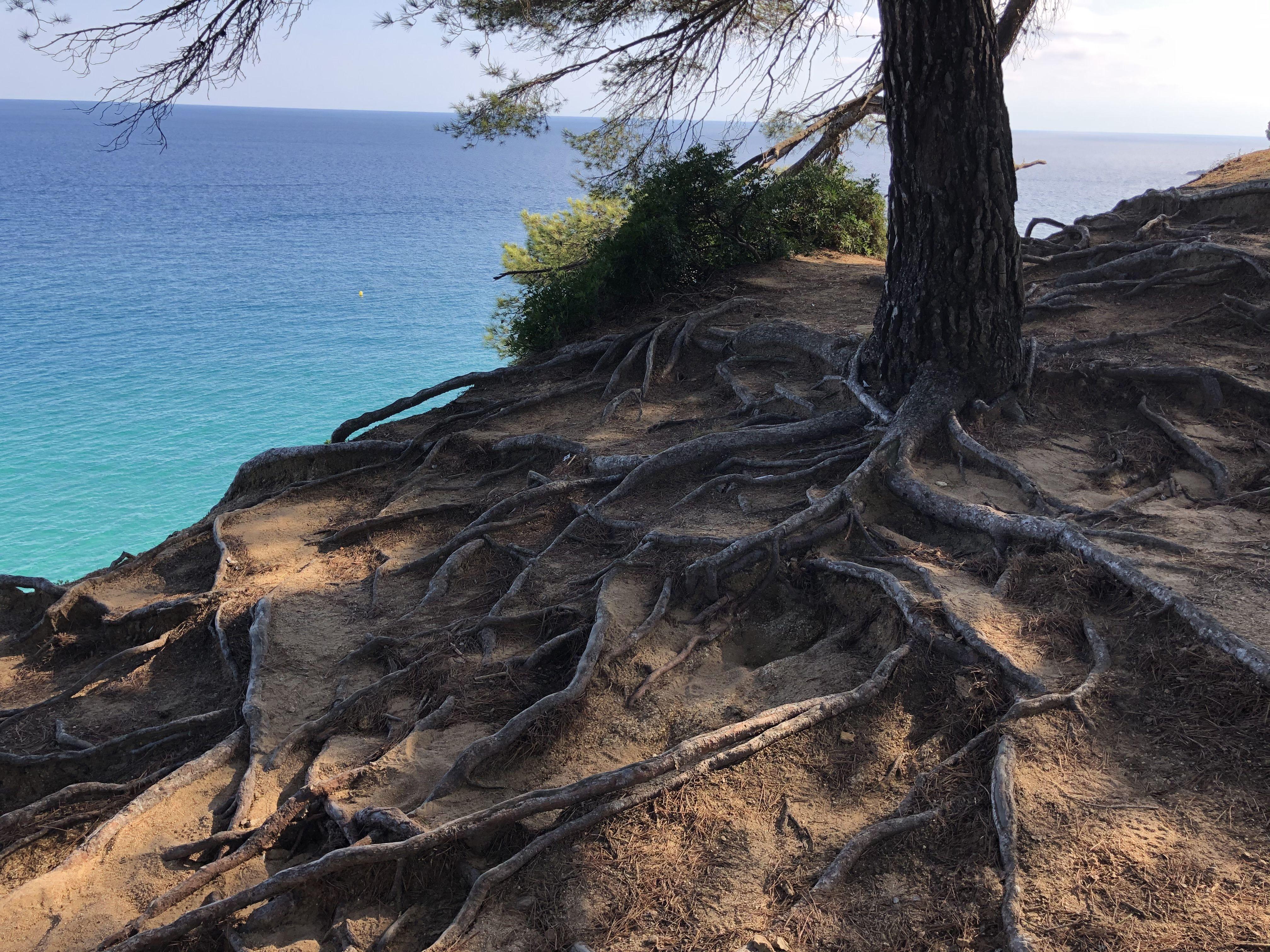 Arrelat Lloret de mar#Eszter De Martin 242