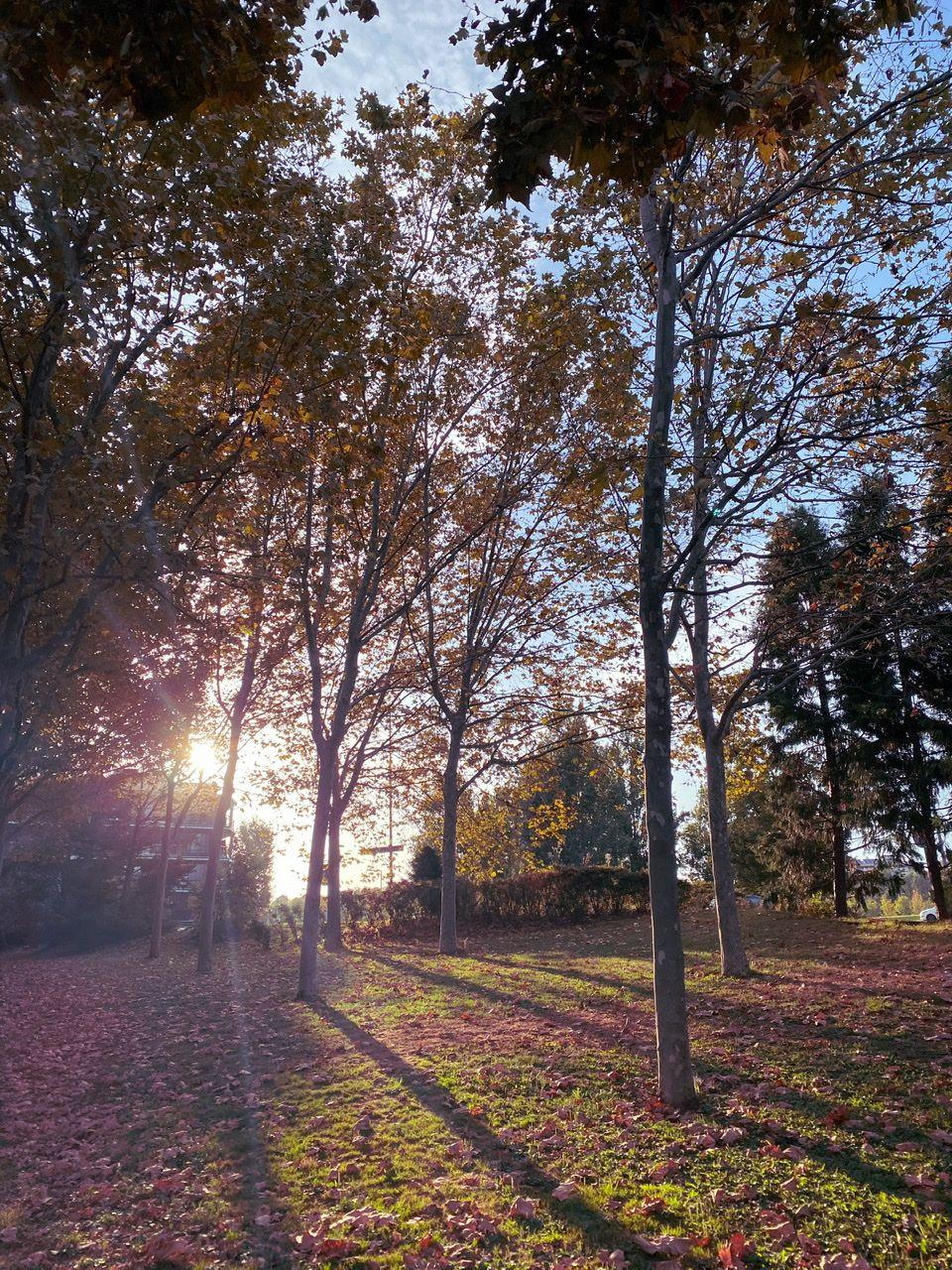 Bosc urbà Sant Cugat del Vallés#Lydia Casanova De Vilalta 66