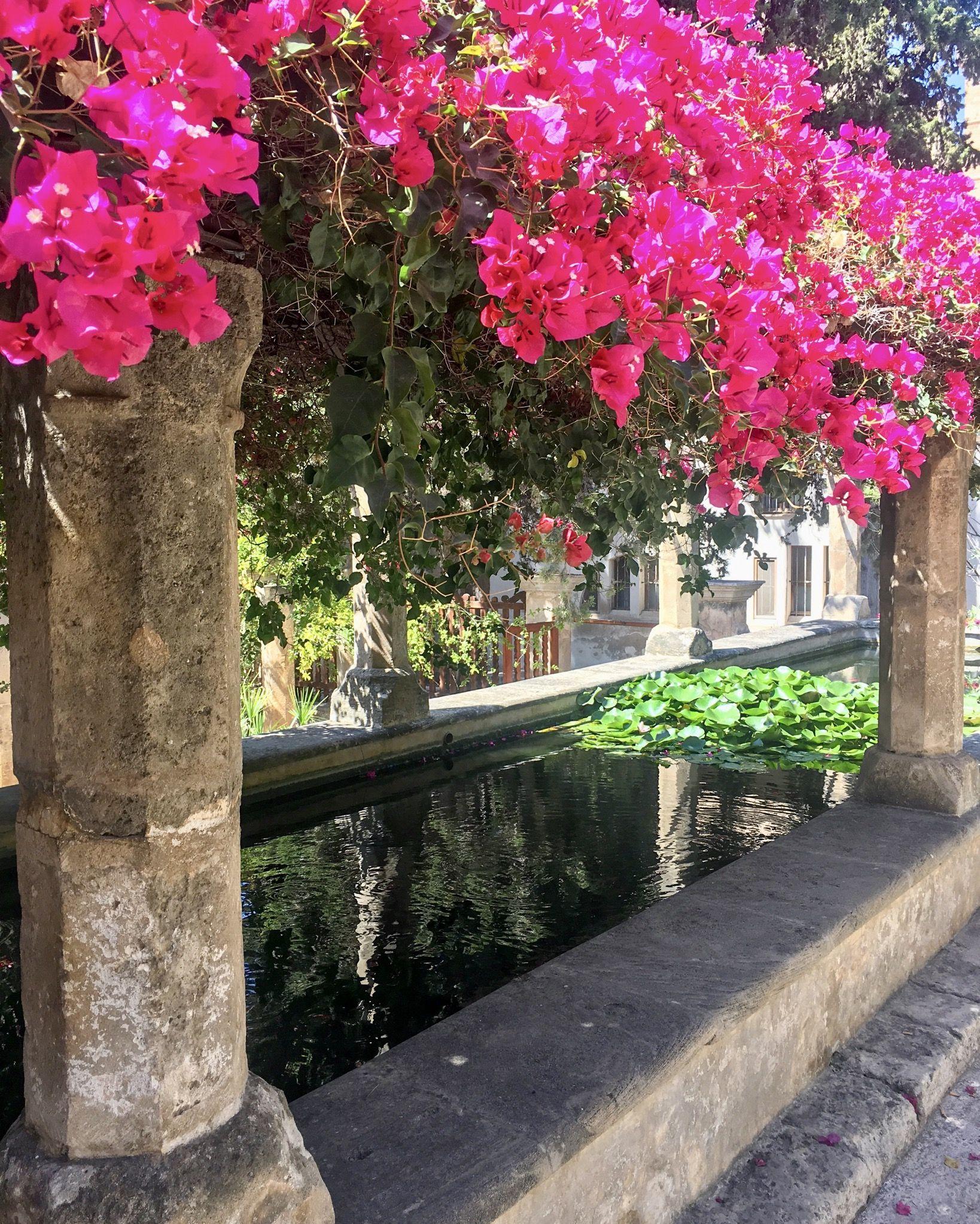 Calma Palma de Mallorca#Montse Carreras Boix 98