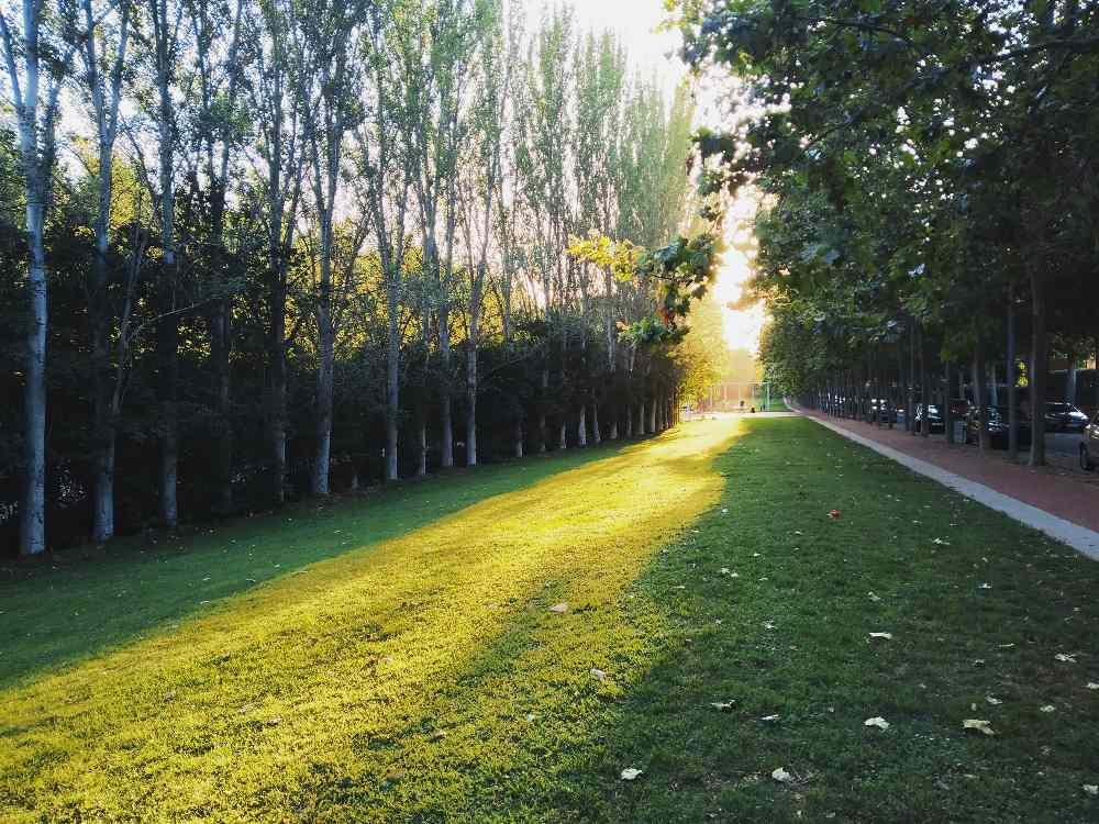 Ja s acosta el crepuscle al parc Sant Cugat del Vallès#Josep Palanqués Ferrer 22