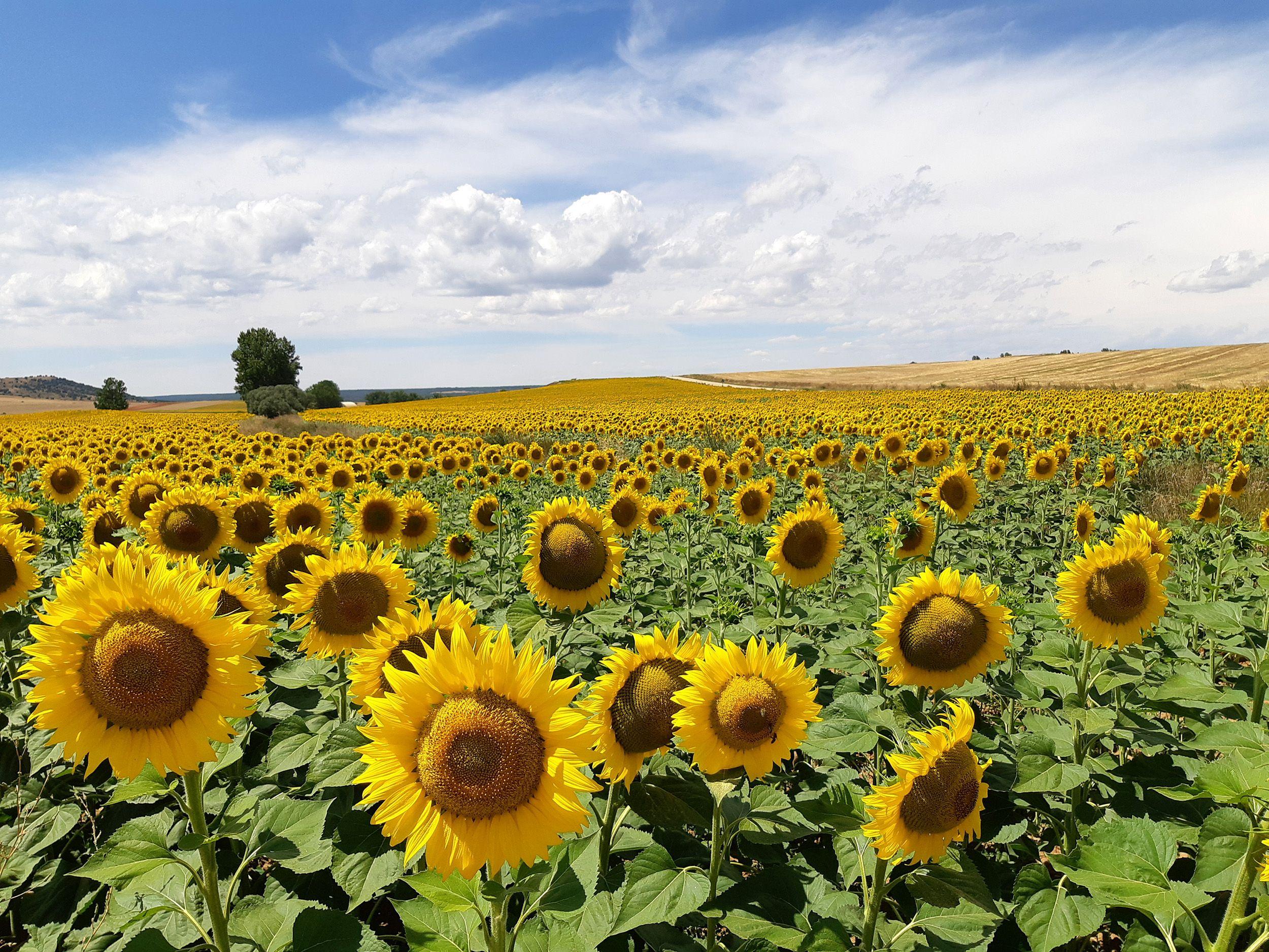 Las sonrisas del verano Rabanera del Campo, Soria#Stella Noviani 81