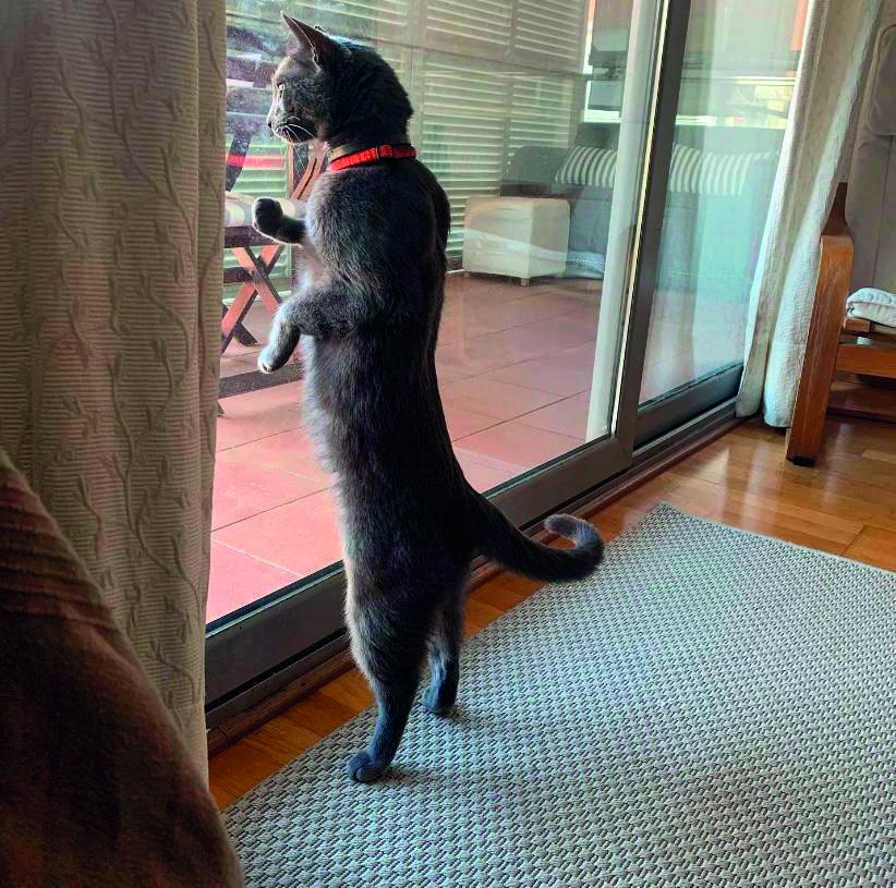 Quan podrem sortir?