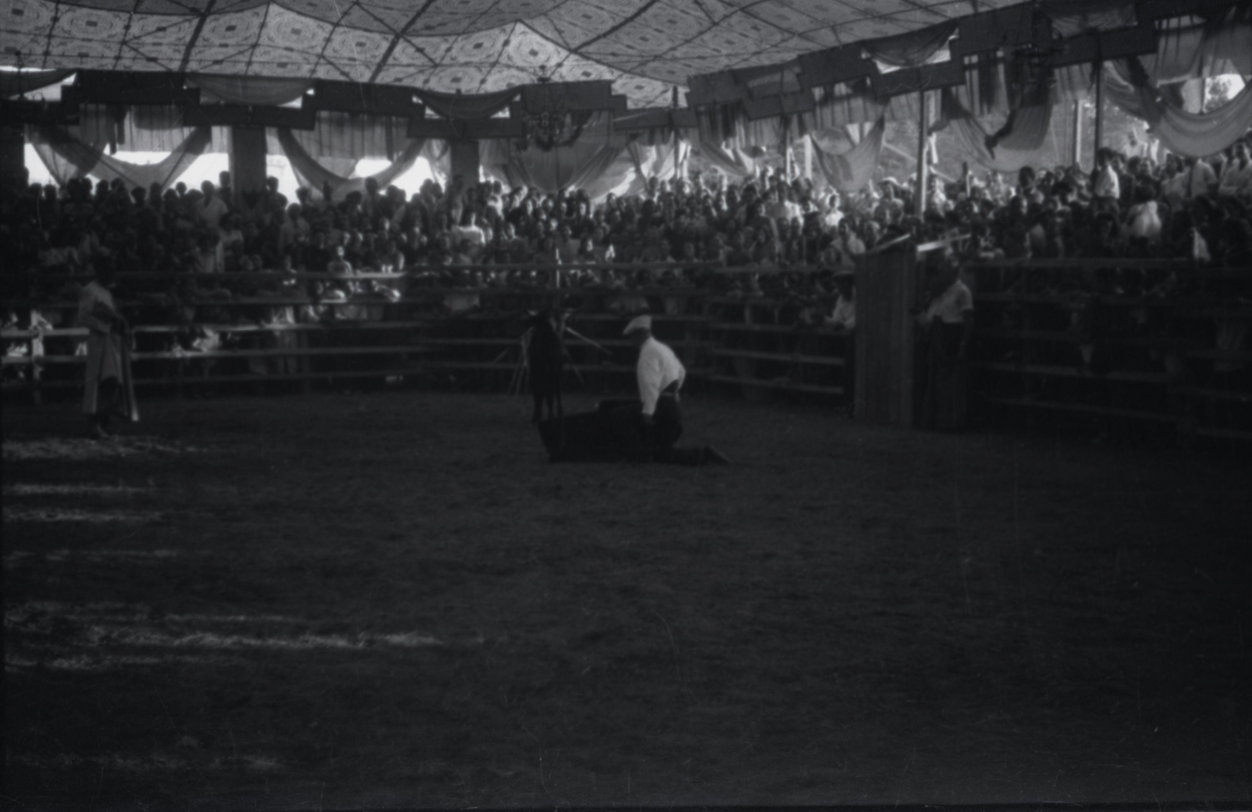 Cursa de braus a l'envelat el 1943. FOTO: Fons Cabanas / AMSCV