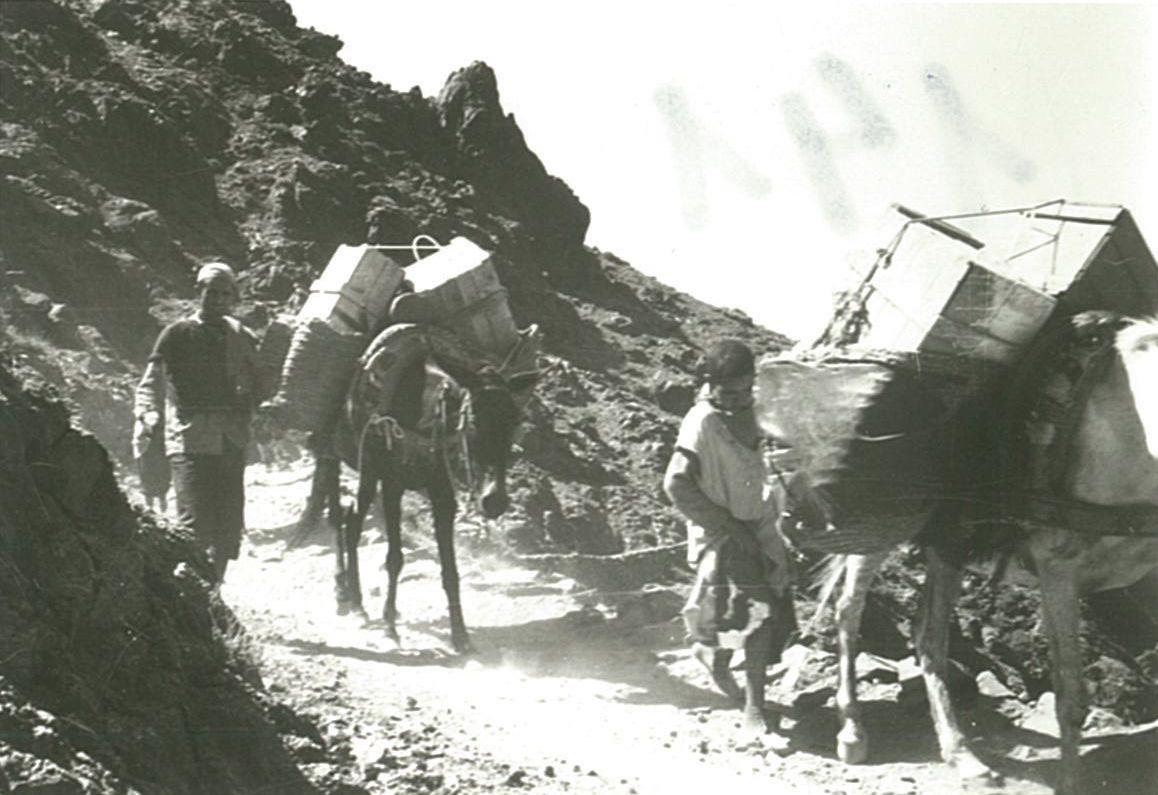 Camí al refugi Neltner amb les mules de càrrega