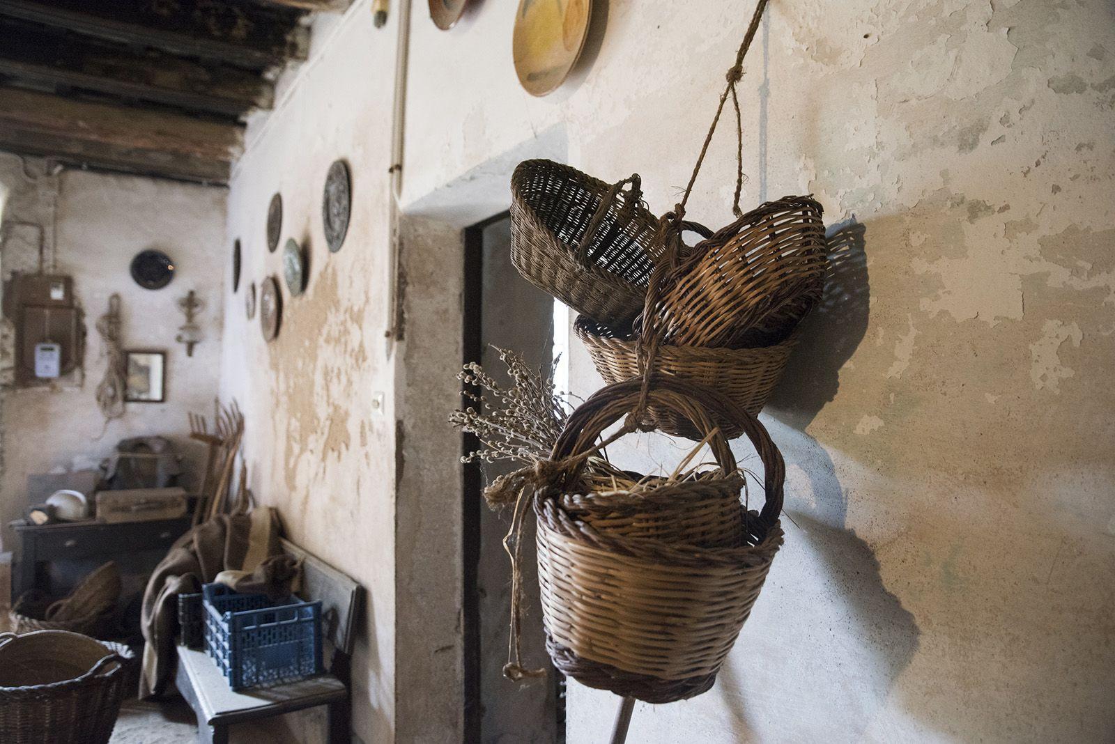 La verema de Can Bell. Foto: Bernat Millet.